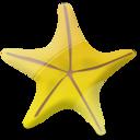Marine star-128